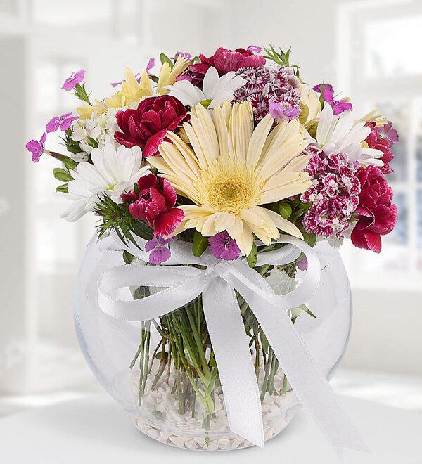 karýþýk kýr çiçekleri