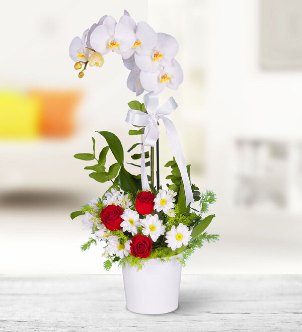 beyaz orkide arajmaný