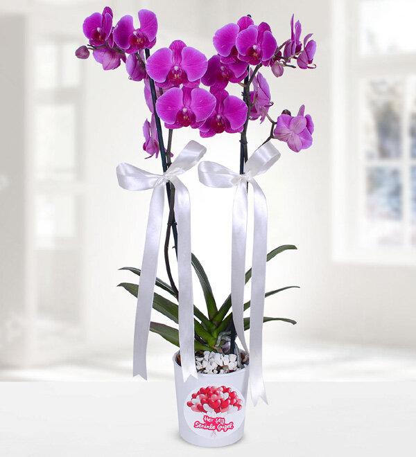 hersey seninle güzel mor orkide